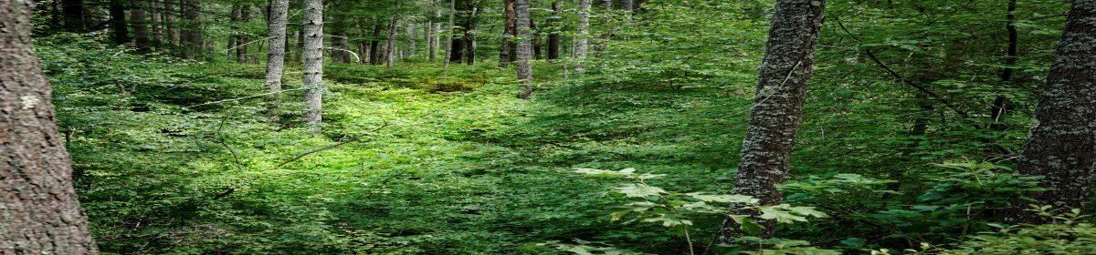 Save the Pine Barrens